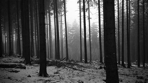 Arbres Paysages Noir Et Blanc Forêt Monochrome Papier