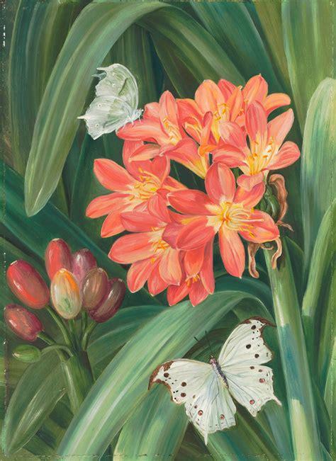 352 Clivia Miniata And Moths, Natal  Marianne North