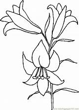 Lily Coloring Pages Easter Drawings Lilies Printable Flower Drawing Outline Clipart Tattoo Lilly Holidays Coloringpages101 Flowers Library Template Stargazer Patterns sketch template
