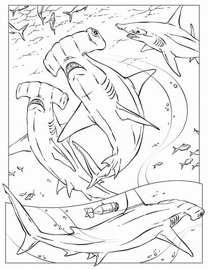 Coloring Pages Hammerhead Shark Sharks Wildlife