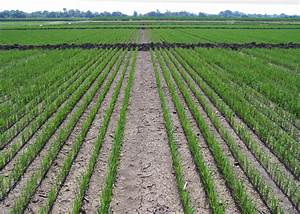 Rains Challenge Even Mississippi Rice Fields