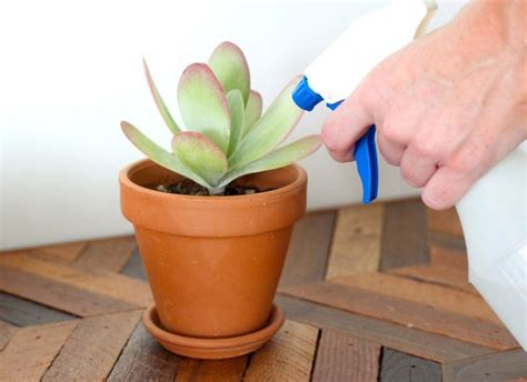 watering succulents in containers 3820 best images about quot suculentas minhas e de outros amigos quot quot juicy my plants and other friends