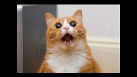 katzen lustiges katzen video zum totlachen lustige