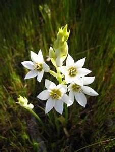 Flower Power Blumen : flower power vektoren fotos und psd dateien kostenloser download ~ Yasmunasinghe.com Haus und Dekorationen