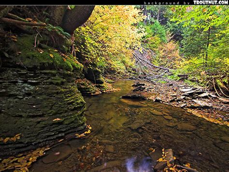 Screensavers Wallpapers Free Animated Scenic - scenic photos animated scenic wallpapers