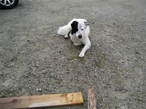 Vermieter Verbietet Hund : hundegalerie wohnmobil forum seite 127 ~ Lizthompson.info Haus und Dekorationen