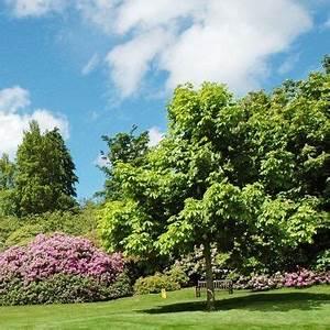 Petit Arbre Persistant : plantes et jardins votre jardinerie en ligne gamm vert ~ Melissatoandfro.com Idées de Décoration