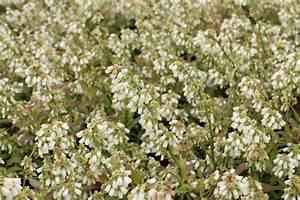 Wann Heidelbeeren Pflanzen : heidelbeeren schneiden wann ist der richtige zeitpunkt ~ Orissabook.com Haus und Dekorationen