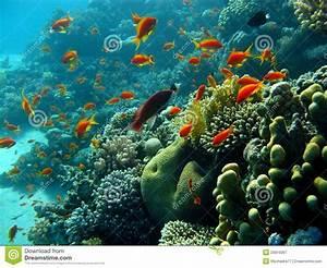 Bilder Mit Fischen : korallenriff mit orange fischen stockbild bild 20910067 ~ Frokenaadalensverden.com Haus und Dekorationen