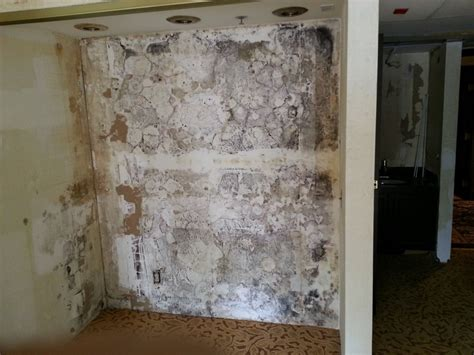 projects mold remediation luxury hotel  ontario
