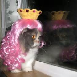 princess cat princess cat cats in wigs