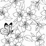 Cherry Blossom Coloring Tree Japanese Colouring Sheets Printable Getcolorings Lovely Getdrawings sketch template