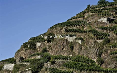 cooperativa sociale quot il gabbiano quot i vini - Www Il Gabbiano It