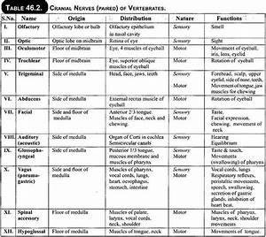 Anatomy Of Nervous System In Vertebrates  With Diagram