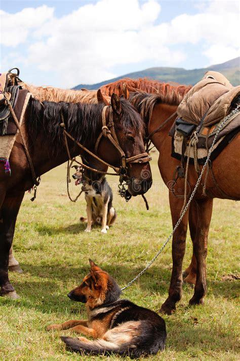 nomadic horses two