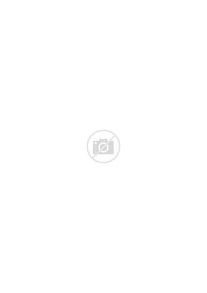 Colouring Mindful Animals Wild Adults Printable Charts
