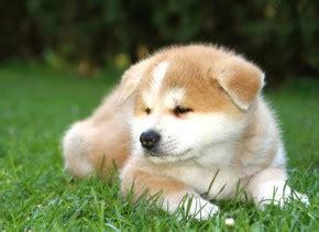 hunde kaufen verkaufen hundemarkt