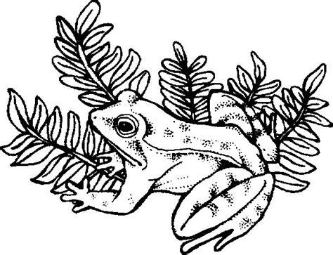 frosch malvorlagen malvorlagende