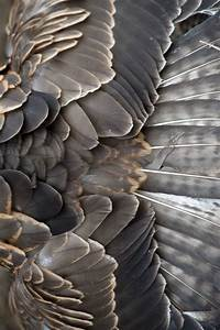Lovely Grey Brown Feathers | Natural Beauty Inspiration ...