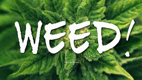Weed Quotes Wishes