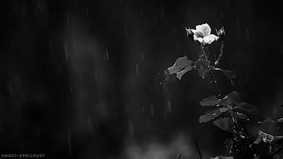 Rain Nature Flower Pretty Magic Midnight Spelldust