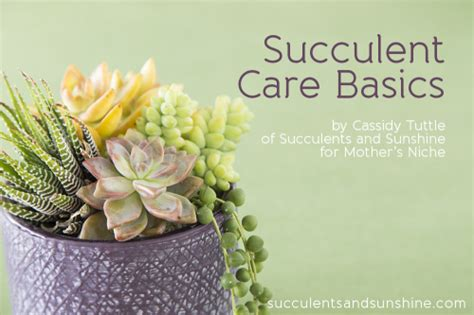 how to take care of a succulent the basics of caring for succulents