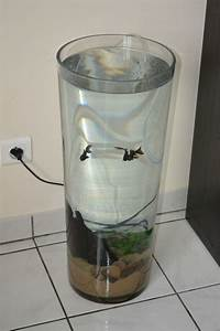 Vase En Verre Pas Cher : comment dcorer un grand vase transparent ~ Teatrodelosmanantiales.com Idées de Décoration