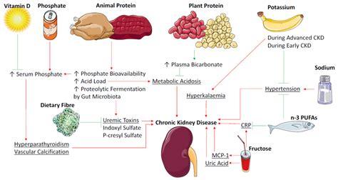 nutrients  full text stirring  pot  dietary