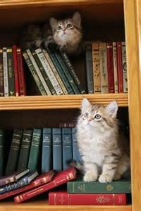cat books cats in the stacks animais