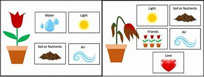 Plant Need Lesson Needs Basic Does Plan