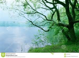 Nature Trees Lakes Scenery