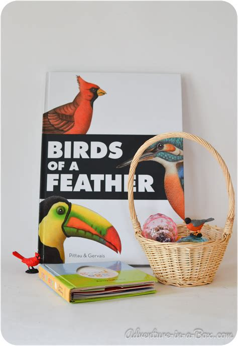 birds of a feather book review adventure in a box