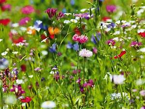 Keilrahmen Kaufen Baumarkt : artland poster leinwandbild botanik blumenwiese blumen wiese foto online kaufen otto ~ Orissabook.com Haus und Dekorationen