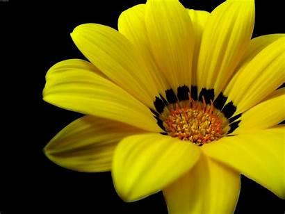 Yellow Flowers Flower Widescreen Wallpapers Desktop Background