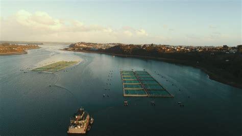 Salmones Aysén: Se han logrado capturar 2 200 pescados