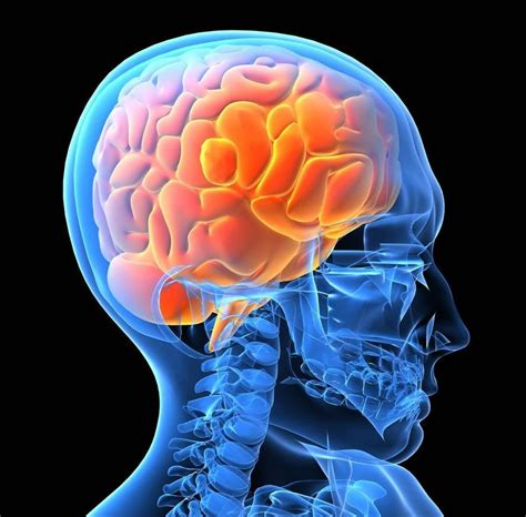 brain human conscience wrong right lifenews