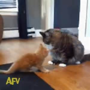 america s funniest home cats america s funniest home s vine quot cats reenact