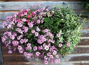 Jardiniere Fleurie Plein Soleil : composer de jolies jardini res quelques id es de composition ~ Melissatoandfro.com Idées de Décoration