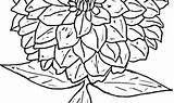 Coloring Zinnia Getcolorings Flowers sketch template