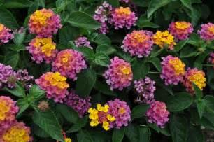 Annual Flower Garden Plants
