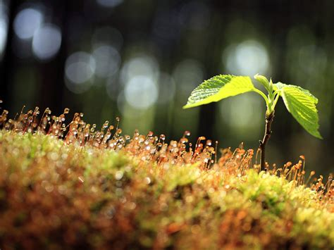 nature landscape pics  green plant gaining  life