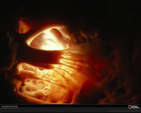 Human Heart Wallpapers - Wallpaper Cave