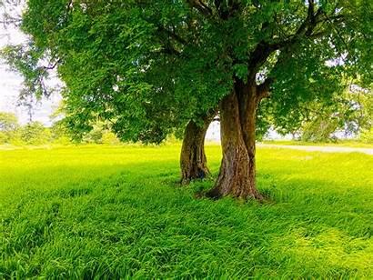 Sri Lanka Nature Trees Paddy Rice Road