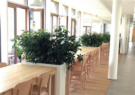 achat bureaux acheter des plantes de bureau chez anygreen