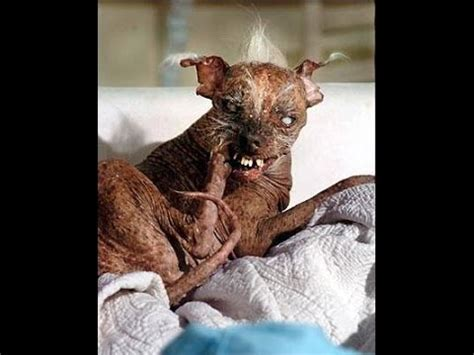 top 10 ugliest dogs in the world youtube