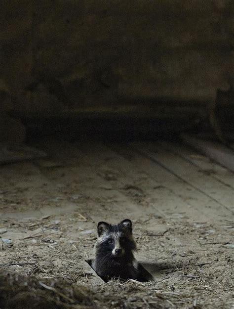 abandoned house   woods    wild animals