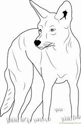 Coyote Coloring Eastern Coloringpages101 sketch template