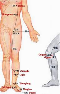 Liver Meridian Of Foot Jueyin  Acupuncture Diagram
