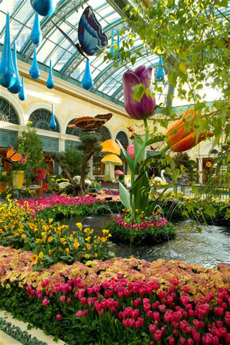 las vegas bellagio brings on the blooms latimes