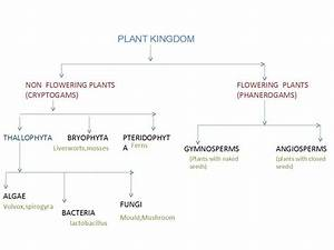 Notes On Classification Of Plants